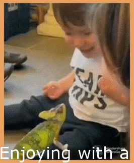 Playing with a chameleon